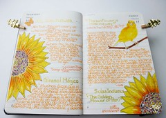 Sunflower / Girasol (Milagritos9) Tags: flowers sun flores sol butterfly sketchbook per sunflowers visualjournal girasol canario birdportrait mily artistjournal visualdiary milagritos birdillustration illustratedjou