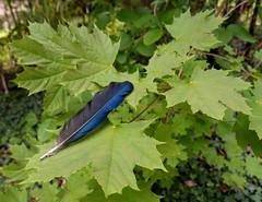plume (Christiane Marilou) Tags: flowers france flores flower nature fleur fleurs garden jardin blumen fiori