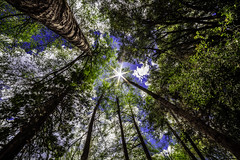 Solar Peace (Justin Lowery) Tags: california blue trees sun mountains green forest star stream afternoon peaceful serene brook southerncalifornia starburst sunstar forestfalls sanbernardinonationalforest bigfalls samyang rokinon canon6d samyang14mm28 rokinon14mmf28