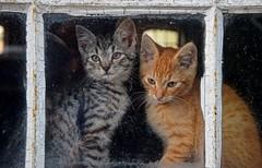 Joshi & Titus (Kai Beinert) Tags: cats katzen bauernhof farm tiere animals