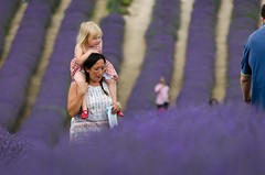 mummy (coolpineapple) Tags: summer lavender girl mummy candid portrait people vacation coolpineapple colour uk england country countryside farm blue family landscape outdoor field west sussex nikon