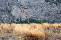 Marinello Lake Flora #ME #Sicilia #Italia . (rossolavico) Tags: squatritomassimilianosalvatore rossolavico europa europe italia italy italien sicilia sicily sizilien messina tindari oliveri marinello filerawnef fileraw filerawnefconversionjpeg viewnx2users nikon nikond3100europa nikond3100 laghettidimarinello laghetti paesaggio landscape thefourbasicelements sabbia deserto desert sand stone pietre scogli cliff