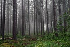 Black Forest, Germany (Sandra Ahn Mode) Tags: blackforest germany schwarzwald forest mist fog trees travel nature landscape enjoygermannature germanytourism visitgermany
