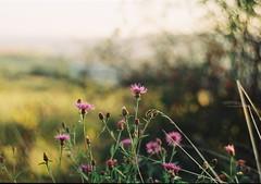 (Robert Ugroci) Tags: sky dreammer 35mm kinofilm ilovefilm filmisnotdead c41 film farebn color fujicolor c200 fujifilm 582 442 helios ltl3 praktica fotograf mlad photographer young light green grass trva slnko sun vhad view preov outdoor kvety flowers bokeh krkujeme