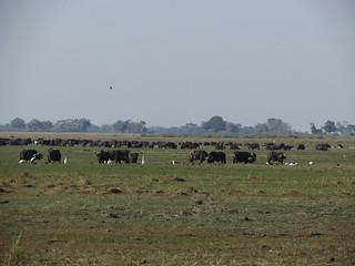Namibia Hunting Safari - Caprivi Strip 3