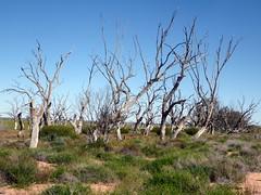 2016-08-17  - Dry Menindee Lake - 3 (Ian Granland) Tags: menindeelake westernnswaustralia menindee