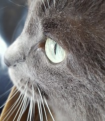 purrfection (space_child) Tags: purrfect cat closeup pet furrybaby sweetface eye face