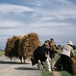 Robert Capa, May 1954 - Trên đường từ Nam Định đi Thái Bình thumbnail