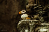relax - Oceanario Lisbona (antoniosimula) Tags: oceanario lisbon lisbona lisboa portogallo portugal area expo fish flora fauna nikon d3200 35mm 70300 tamaron ocean species pacific atlantic indian