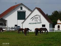 Am Allgaierhof in Oberschwaben / Deutschland - On 'Allgaierhof' in Upper Swabia / Germany (warata) Tags: 2016 deutschland germany sddeutschland southerngermany schwaben swabia oberschwabenupperswabia schwbischesoberland badenwrttemberg landschaft landscape allgaierhof pferdehof gestt kapelle pferde fohlen lippertsweiler aulendorf