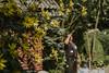 Till_Junker_20160914-_ILL4668 (till_junker) Tags: reetdach reetdachdecker dachdecker handwerk stade reetdachdeckerjunker reetdachhaus junker stadehagen landkreis natur umwelt nature handmade