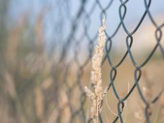 HFF! (A_Peach) Tags: g5 olympus autumn plant fence hff panasoniclumixg5 olympusf1845mm zaun grass dof bokeh