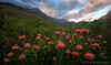 Greyton Protea Sugarbird (Panorama Paul) Tags: paulbruinsphotography wwwpaulbruinscoza southafrica westerncape greyton overberg pincushionproteas capesugarbird riviersonderendmountains clouds sunset nikond800 nikkorlenses nikfilters