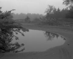 foggy montissippi morning (Paul Lundberg) Tags: mamiyarb67pros sekorc90mmf35 neopanacros100 kodakhc110 epsonv550 film blackwhite fog minnesota