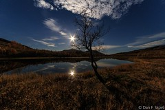 Lonely tree under the moon (Dan F Skovli) Tags: ngs troms kvnangen jkelfjord fullmne fullmoon canon6d samyang norway autumn fall hst skovli ngc