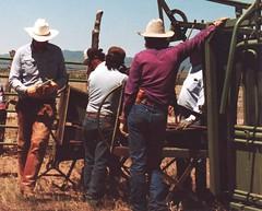 COWBOY GEAR (AZ CHAPS) Tags: ranch arizona leather cowboy wranglers chaps ranching