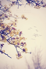 spring serenade (pinkorchid_too (Sandra)) Tags: pink trees nature birds yellow spring beige lilac