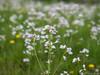 Frühlingswiese 27.04.2012