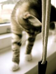 DSC05912.JPG (Davidshansen+) Tags: pet cute cat kat chat pussy gato katze   puss mis gatto figaro  huisdier pussycat haustier   kucing pusa    cattus animaldeestimao  missekat     conmo