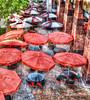 dsfumbrella (vineetsuthan) Tags: hdr nikond800 vineetsuthan hdrusingnikond800 vineetsuthanhdr