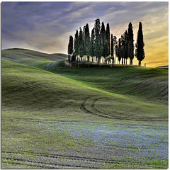 Tuscan sinuosity (Nespyxel) Tags: trees sunset sky italy nature alberi square landscape italia tramonto country hill curves campagna cielo tuscany siena toscana valdorcia paesaggio collina cipressi sanquiricodorcia sinuosity nespyxel stefanoscarselli