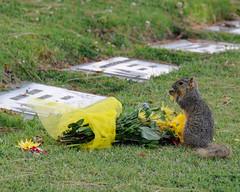 Squirrel Praying (MD-Photo's) Tags: california sunset animal squirrel memorial funny day praying humor service redondobeach animalspraying