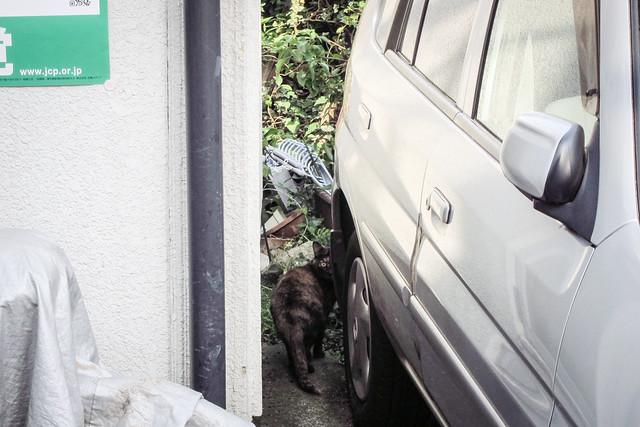 Today's Cat@2012-05-30