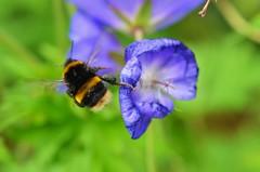 DSC_1693 (twoody291) Tags: uk nature wildlife shirebrookvalley thomaswood fbdg twoody291 thomascwood mrwoodsphotography
