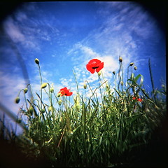 red poppy (angela_c_m) Tags: blue sky france green 120 film analog mediumformat square holga lomo lomography lofi poppy poppies analogue pastoral redflower 120mm 120n lofidelity
