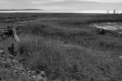 Cook Inlet View (Aerogami.com) Tags: blackandwhite southwest monochrome alaska point looking angle wide olympus tokina driftwood anchorage inlet grasses konica pt toward cookinlet hexanon 1735 woronzof tokina17mmf35 aerogami