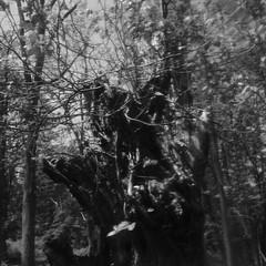 howl (twice) (wood_owl) Tags: old ohio blur tree nature monochrome river experimental decay ivy stump cuyahoga poison remain howl cuyahogavalleynationalpark reclaim floodplain toxicodendronradicans sooc likeruthlessvines