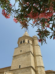 In the Shade of the Oleander (Annie in Beziers) Tags: flowers sky plant france tower church sunshine medieval spire restored oleander cathars hérault 1209 béziers annieinbéziers