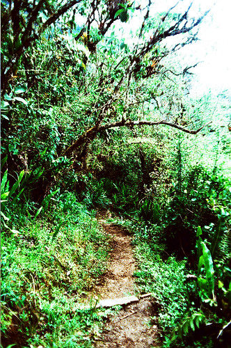Small path next to Choquequirao, Day 3