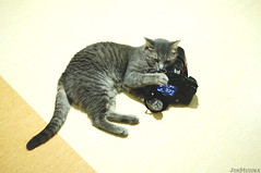 I can haz camera (Jon Medina) Tags: camera cute cat hope funny lol sony meme alpha spca shedding a35 stephgomez nickdinatale sheddinghope