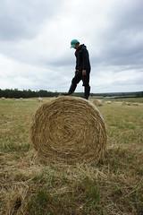 walk on the rolling haystack (superholly0926) Tags: sheep australia broccoli perth lamb twinlakes westernaustralia shearing  manjimup  sheeping broccolifarm    rollinghaystack