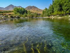 Oasis | Jaghori | Afghanistan (Hadi Zaher) Tags: mountain afghanistan mountains tree green river highlands stream central rocky dry oasis koh hindu channel irrigation hazarajat jaghuri kush ghazni jaghori jaghoori jaghury