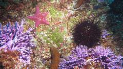 Sea Grouping (Ed Bierman) Tags: scuba diving marinelife ncrd gaydiving