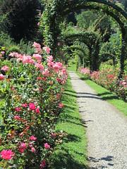 Italy - Piedmont - Lake Maggiore - Stresa - Villa Pallavicino - Roses (JulesFoto) Tags: italy piedmont lakemaggiore stresa villapallavicino lagodimaggiore