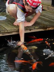 DSCF2266 (ronaldzijlstra2) Tags: kid son boy dog cairnterrier koi vis vish vijver pond