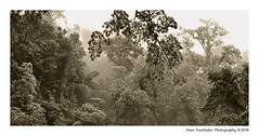 Tropical rainforest, Catarata Rio Fortuna, Costa Rica (Marc Funkleder Photography) Tags: lafortuna arenal alajuela catarata waterfall cascade costarica riofortuna reservaecolgicacataratarofortuna rainforest tropical frethumide frettropicale jungle arbre tree brume mist canop canopee monochrome sepia nikond750 nikon28300 nikon nature sauvage wild