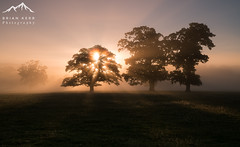 Magical Mist (.Brian Kerr Photography.) Tags: cumbria lazonby landscapephotography mist trees sonyuk a7rii availablelight briankerrphotography wwwbriankerrphotographycom