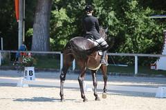 IMG_7454 (dreiwn) Tags: dressage dressur dressuur pferd reitturnier turnierreiten pferdesport horse horseback horseriding equestrian reitverein dressurprfung kandare doublebridle reiten pferde reitplatz ridingarena