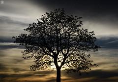 Tree (Carlos Antequera Folgado) Tags: sevilla seville carlosantequerafolgado espaa spain europa nikon d5100 contraluz tree arbol arboles cielo luz 50mm nikorr nikor dslr backlightling andalucia fotografia shoot