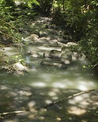 Still Creek in Renfrew Ravine Polluted (Rod Raglin) Tags: renfrew ravine still creek pollution environment park cloudy water milky substance
