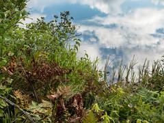 Seney Wildlife Refuge 02 (Podsville) Tags: august michigan seneynationalwildliferefuge upnotth upperpeninsula summer