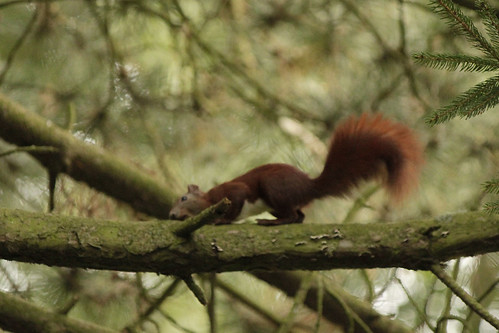 043_Eichhörnchen
