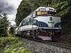Back (Tony Tomlin) Tags: amtrak amtrakcascades railroad railway bnsf southsurrey britishcolumbia crescentbeach bc canada npu ge amtrakgenesis locomotive diesel diesellocomotives