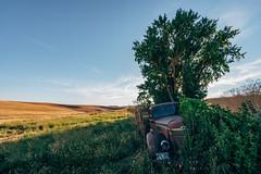 Silent And Lost (Pedalhead'71) Tags: whitmancounty washington abandoned truck palouse