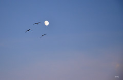Libertad (ZAP.M) Tags: cielo horaazul la barrosa chiclana cdiz andalucia flickr zapm mpazdelcerro nikon nikond5300 naturaleza