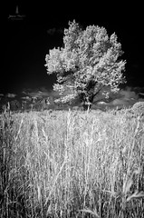 teton_infrared_2016_3web (Jessica Haydahl Photography) Tags: grand teton national park wyoming tetons mormon row john molton barn apsens fall colors infrared photography nikon d810 d7000 pentax 645z medium formate landscape ansel adams